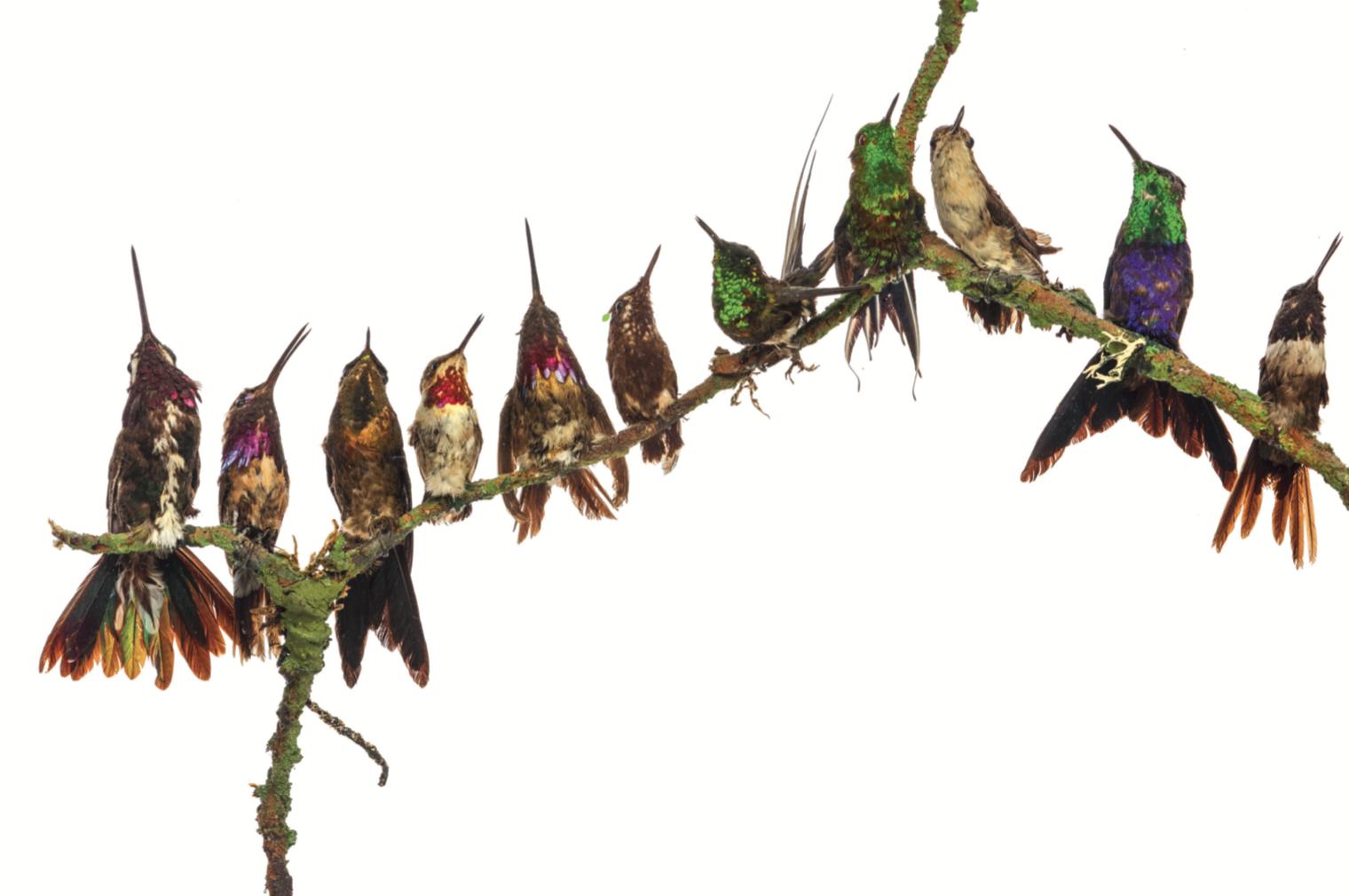 Detail Victoriaans zomerhaardscherm met opgezette kolibries door Henry Ward (1812-1878), Engeland circa 1850, 130x140cm